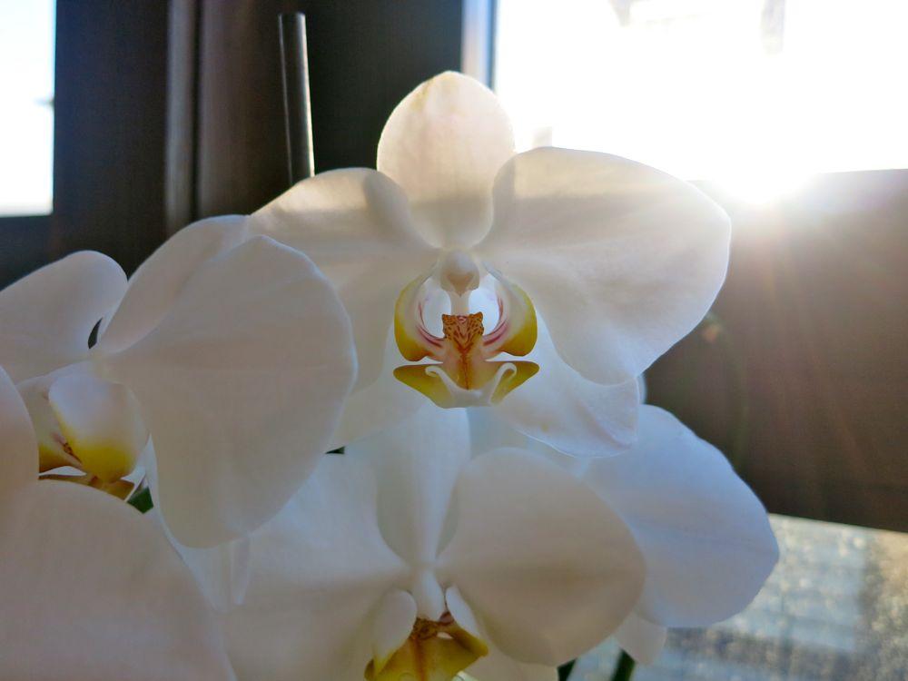 orkidé2