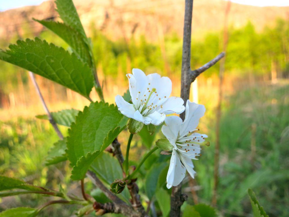 _flowers_lineharbaks_garden02