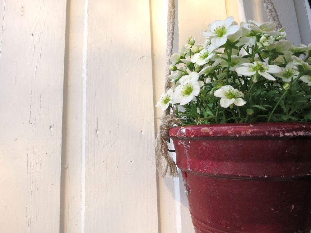 _flowers_lineharbaks_garden12