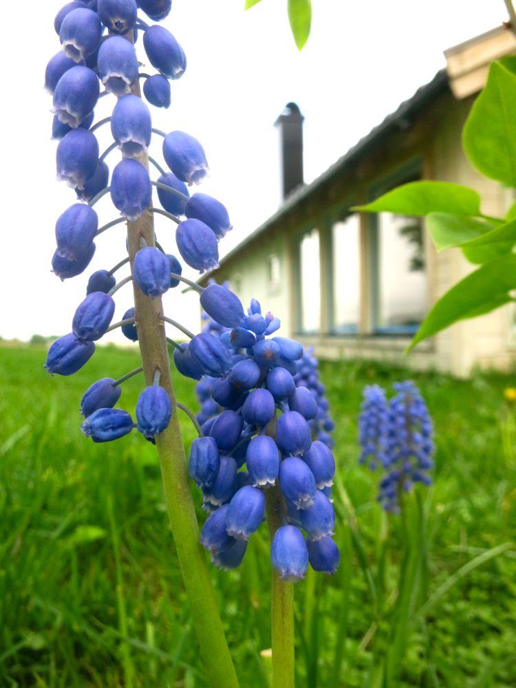 _flowers_lineharbaks_garden14