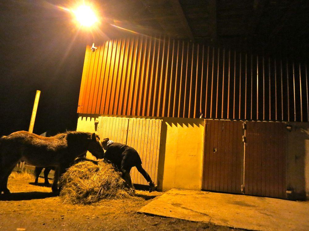 121116_lineharbak_horses2